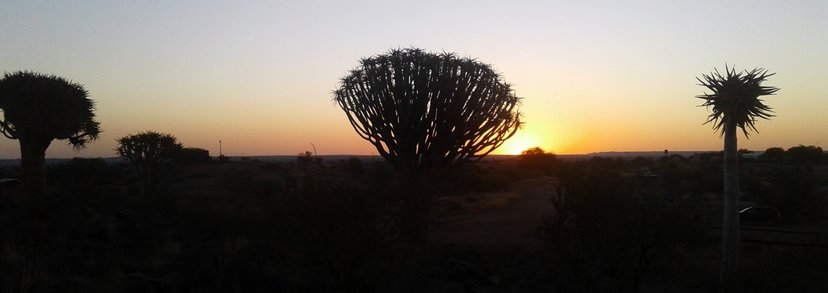 rsz_sunsetquivertree
